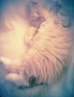 photo of a fluffy ginger kitten curled up in a ball partly on their back